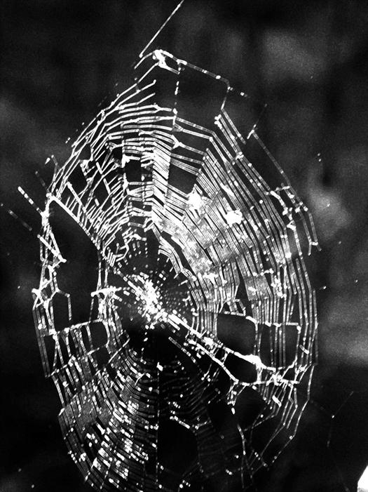 Therespoetryinspiderwebs