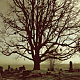 dundee cemetery tree..