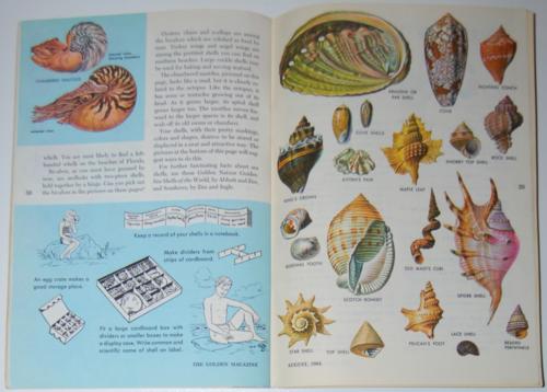 Aug 1964 golden mag shells