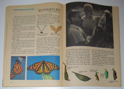 Golden special summer 1971 butterflies