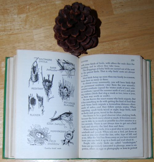 Girl scout handbook 1951 nests