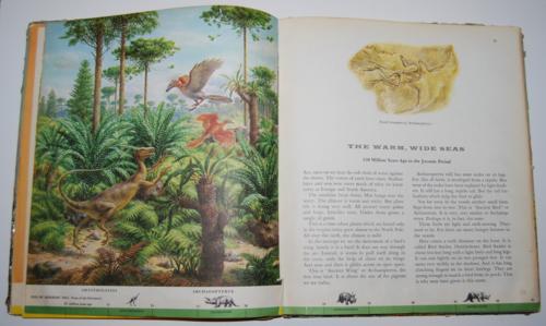 Dinosaurs book 5
