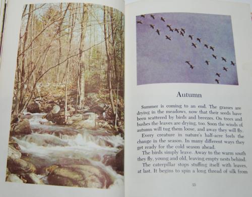 Walt disney's true life adventures book 6