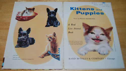 Kittens & puppies 2
