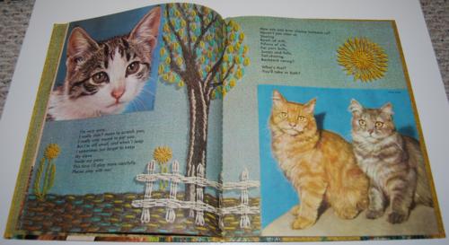 Tell me cat 5