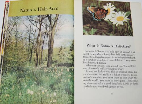 Walt disney's true life adventures book 4