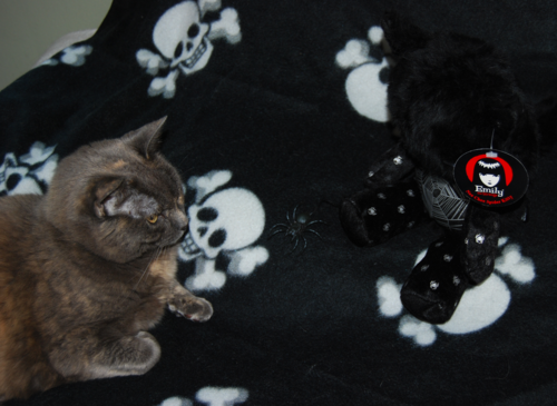 Emily cats spidey 4