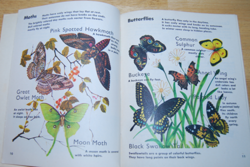 Learn about insects 3