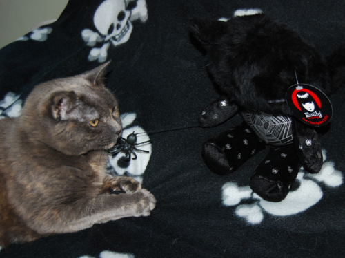 Emily cats spidey 6