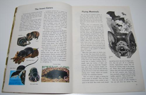Gb exploring earth animals 4