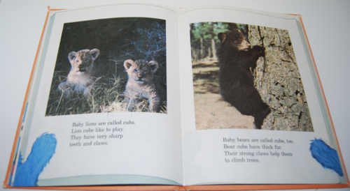 Grover's book of cute little baby animals 4
