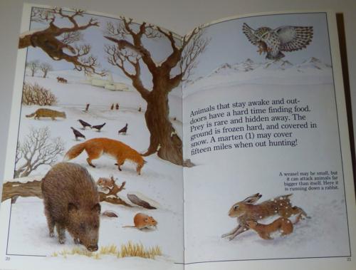 Animals in winter 1985 7