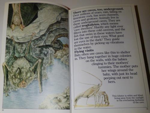 Animals underground 1985 4
