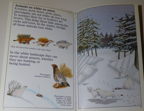 Animals in winter 1985 8