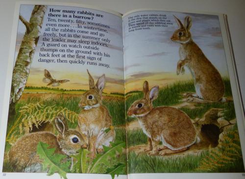 Animals underground 1985 2