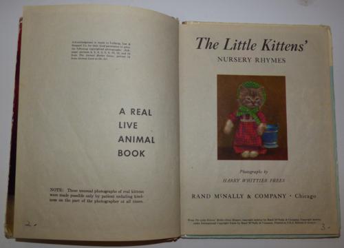 The little kittens nursery rhymes 2