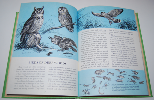 Golden picture book of birds 6