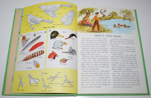 Golden picture book of birds 3