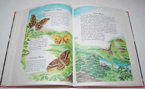 Wonders of nature book 9