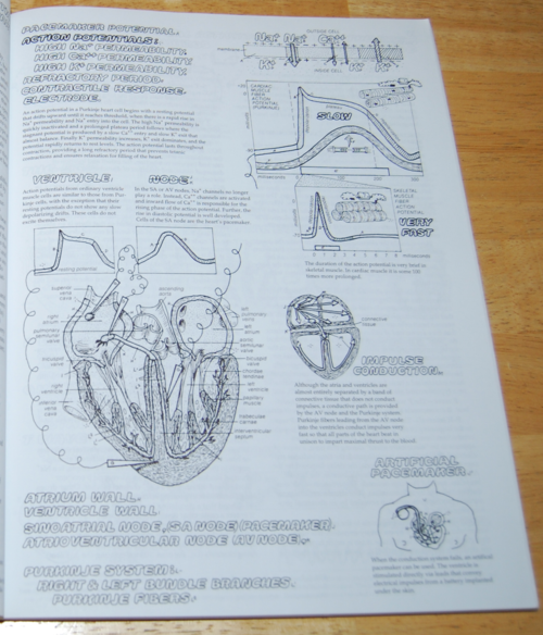 Physiology coloring book 2