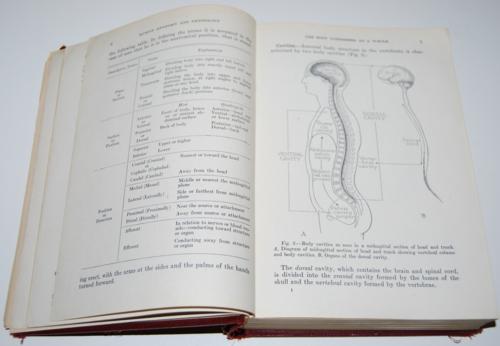 Vintage human anatomy & physiology book 2
