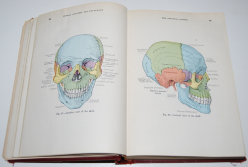 Vintage human anatomy & physiology book 3