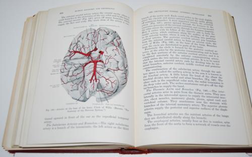 Vintage human anatomy & physiology book 7