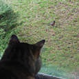 backyard birdies