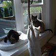 kitties & window nests
