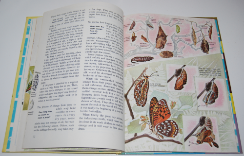 How & why butterflies & moths 7
