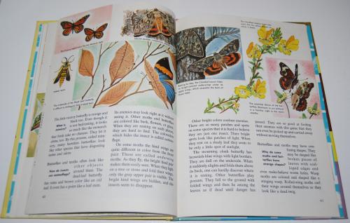How & why butterflies & moths 8