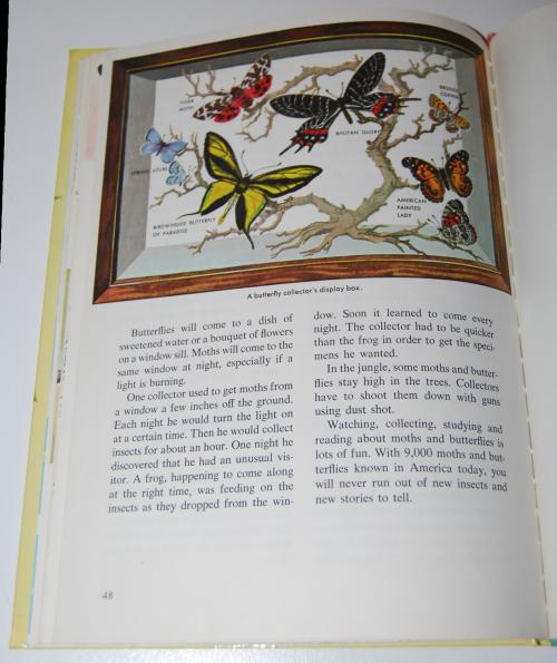 How & why butterflies & moths 10