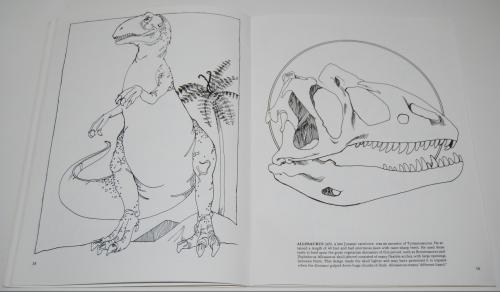 Dover dinosaur coloring book 7