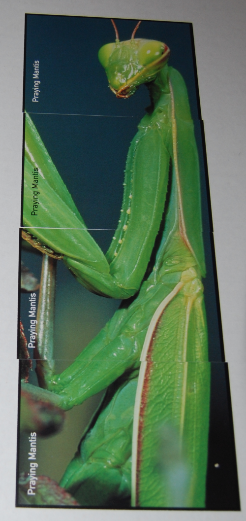 Go bug match card game 1