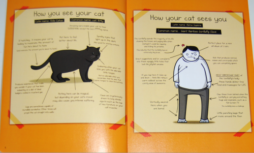 How to tell if your cat is plotting to kill you 1