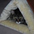 kitty shack