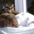 kitty nest