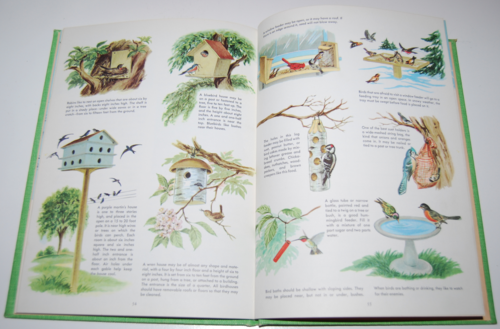 Golden picture book of birds 7