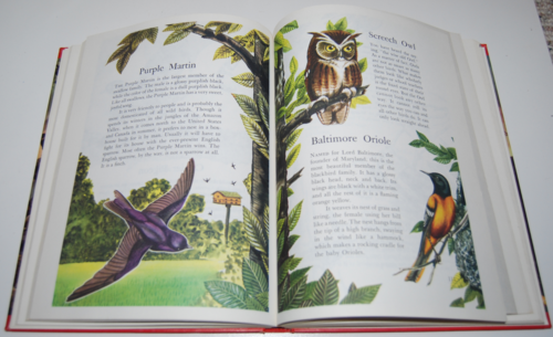 Wonders of nature book 6