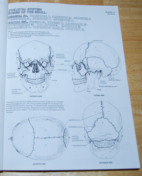 Anatomy coloring book 4