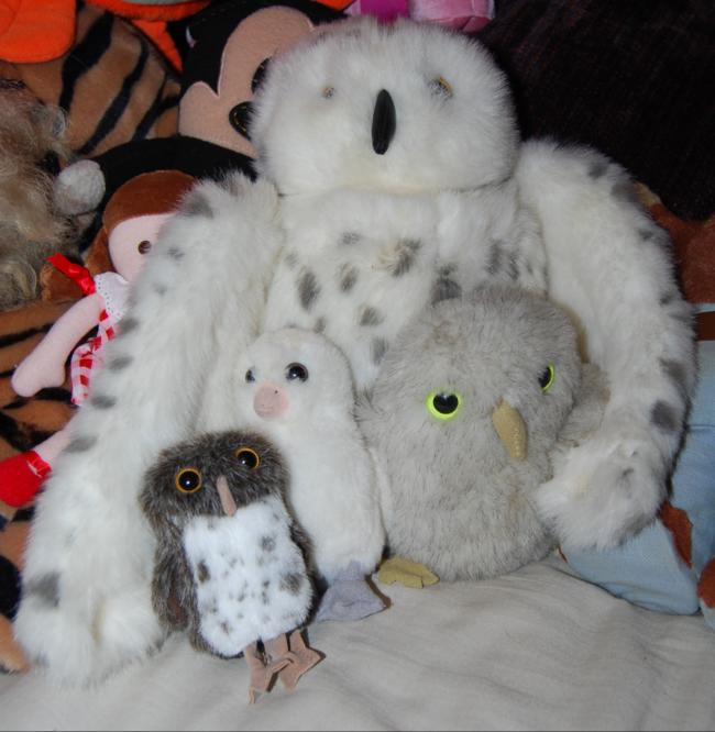 happy earth day! ~ i love owls