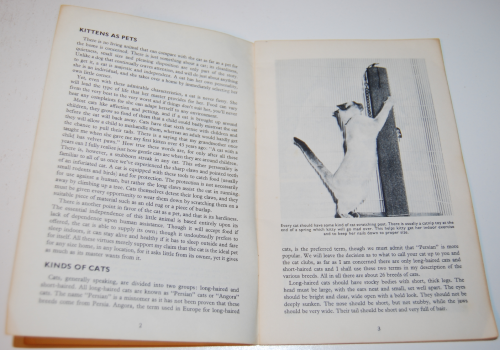 Kittens vintage guide 2