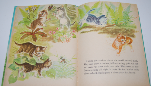 The wonder book of kittens 6