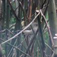 snug's birdies