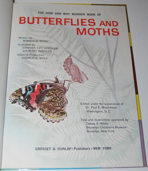 How & why butterflies & moths 1