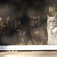 good kitties