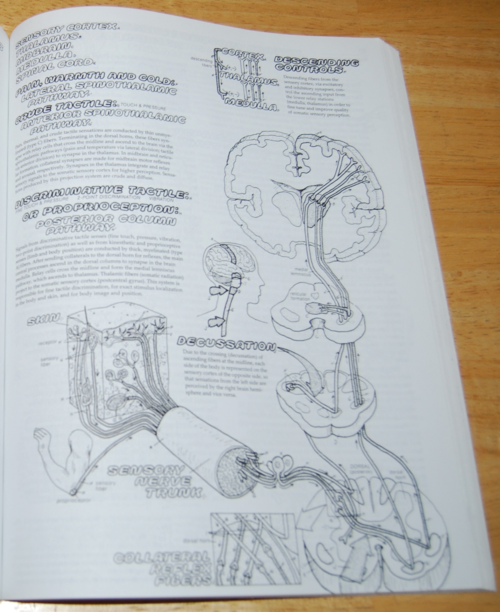 Physiology coloring book 5