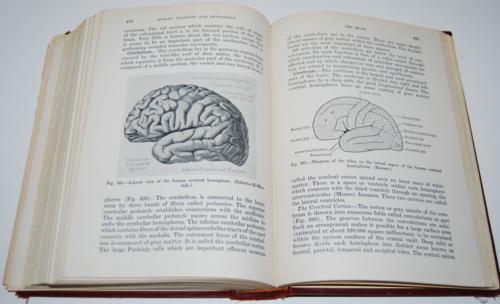 Vintage human anatomy & physiology book 9