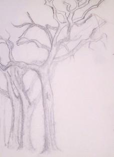 3_trees_x