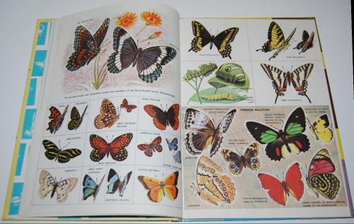 How & why butterflies & moths 4